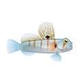Prawn Goby (1).png