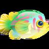 Broadbarred Goby (1)