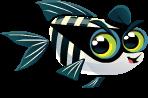Little-Aquarium-Robber-Fish-Adult