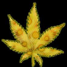 Cannabis cheese