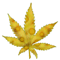 File:Cannabis cheese.png