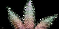 Cannabis: Sunny Day