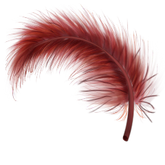File:Red feather.png