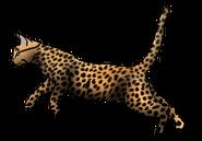 Cheetahspirit.warrior
