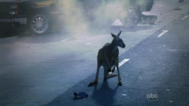 File:Kangaroo wat.png