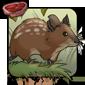 Roan Mouse
