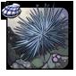 Snowflake Urchin