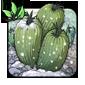 Tundra Cactus