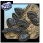 Cragside Mussels