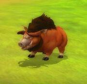 Tough Wild Boar