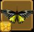 Golden Birdwing§Headericon