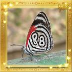 Flutterfact20141021Cramers88