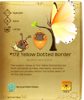 Yellow Dotted Border§Flutterpedia