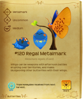 Regal Metalmark§Flutterpedia