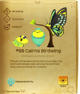 Cairns Birdwing§Flutterpedia