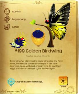 Golden Birdwing§Flutterpedia