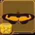 Hewitson's Acraea§Headericon