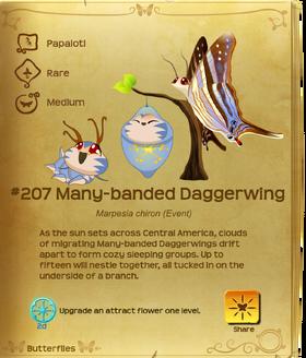 Many-banded Daggerwing§Flutterpedia