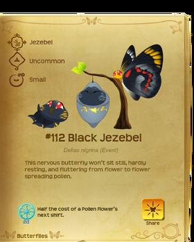 Black Jezebel§Flutterpedia