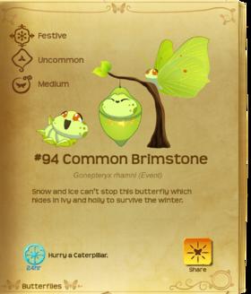 Common Brimstone§Flutterpedia