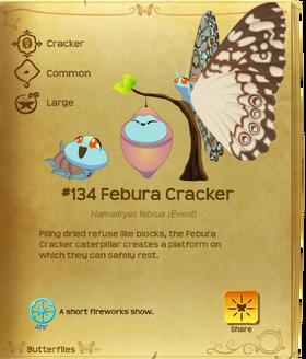 Febura Cracker§Flutterpedia