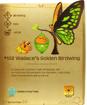 Wallace's Golden Birdwing§Flutterpedia