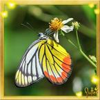 Flutterfact20140909ColourWarning