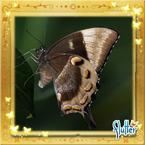 Flutterfact20160428UlyssesSwallowtail