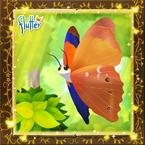 Flutterfact20141112Tomato