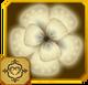 Acraea Set§AF1 100%