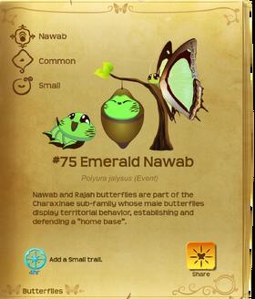 Emerald Nawab§Flutterpedia