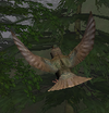 Starlingicon