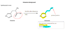 Histamine synthesis