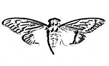 File:Cicada 3301 logo.jpg