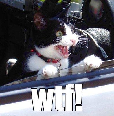 File:Wtfcat.jpg