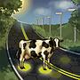 Solar Roads (tech)