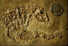 Placosauriops rev 6gxa