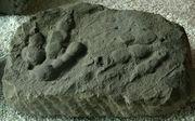 JialingpusYuechiensis(Ichnite)-PaleozoologicalMuseumOfChina-May23-08
