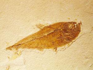 Cretaceous Period Fish by dyet