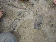 Desmatosuchus scutes1