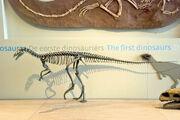 EoraptorBrussels