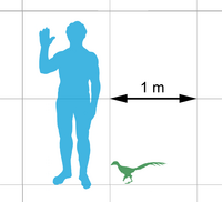 Jinfengopteryx-scale