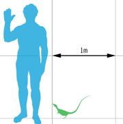 Sinosauropteryx scale