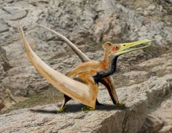 Ningchengopterus BW