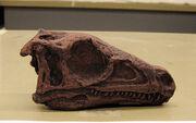Eoraptor1