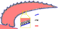 Halkieriid sclerite structure 300.png
