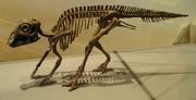 ROM-MaiasaurBaby-May14-05
