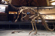 Plateosaurus Museo del Jurásico de Asturias