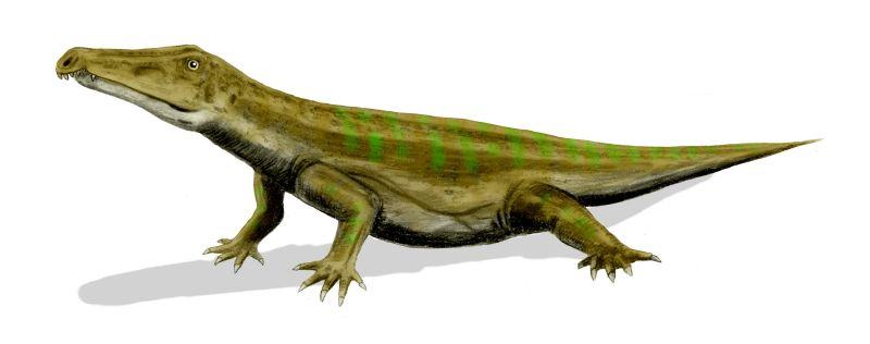 Chasmatosaurus BW