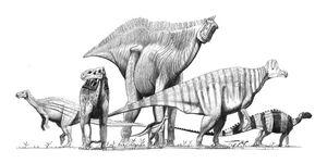 Ornithopods jconway